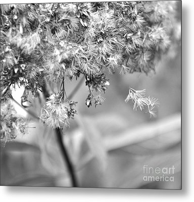 Fluffy  2 Metal Print by Tanya  Searcy