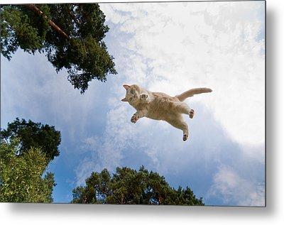 Flying Cat Metal Print by Micael  Carlsson