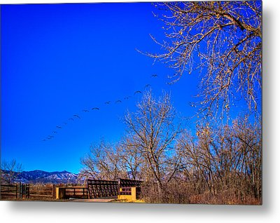 Flying Over South Platte Park Metal Print by David Patterson