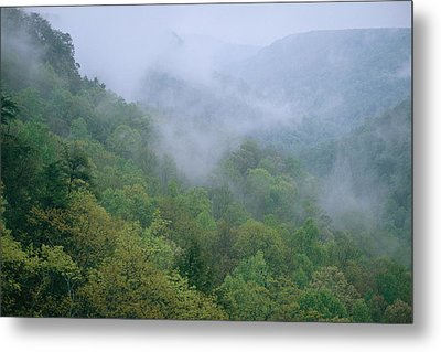 Fog Drifts Across A Cove In Tennessee Metal Print by Stephen Alvarez
