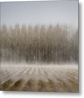 Foggy Trees Metal Print by Antonio  Luis Martinez Cano