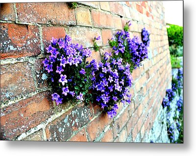 Follow The Flower Brick Wall Metal Print by Rene Triay Photography