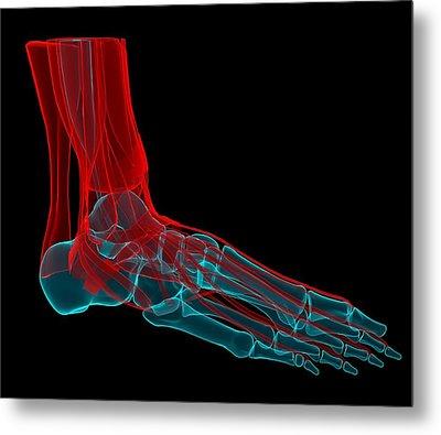 Foot Anatomy, Artwork Metal Print by Andrzej Wojcicki