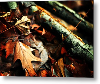 Forest Fade Away Metal Print by Rebecca Sherman