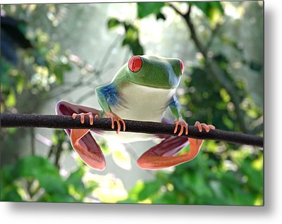 Forest Frog Metal Print by Ilendra Vyas
