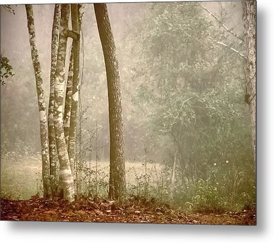 Forest In Fog Metal Print by Robert Brown