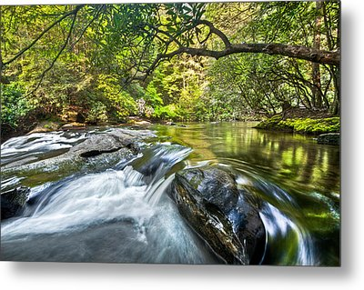 Forest Jewel Metal Print by Debra and Dave Vanderlaan