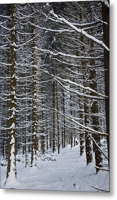 Forest Of Marburg In Winter Metal Print by Axiom Photographic