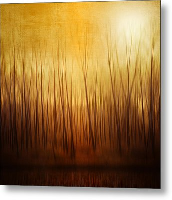 Forest Metal Print by Philippe Sainte-Laudy Photography
