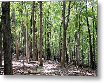 Forest Through The Trees Metal Print by