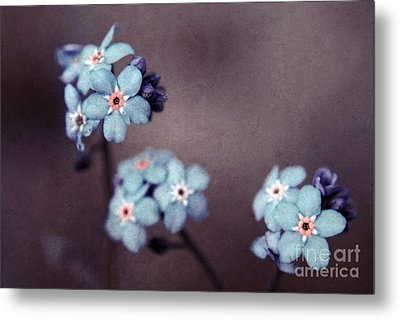 Forget Me Not 01 - S05dt01 Metal Print by Variance Collections
