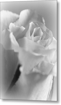 Friendship Rose In Black And White Metal Print by Mark J Seefeldt