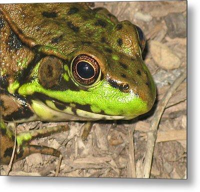 Frog Metal Print by Debbie Finley