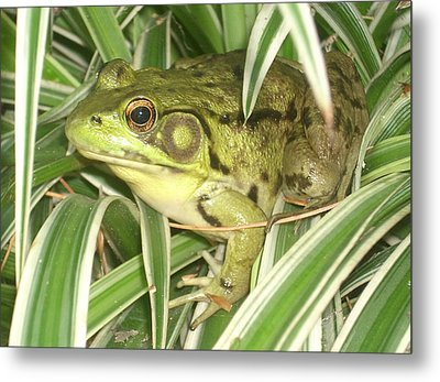 Frog In Plant Metal Print by Rachel Snell