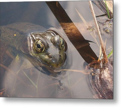 Frog Metal Print by Samantha Howell