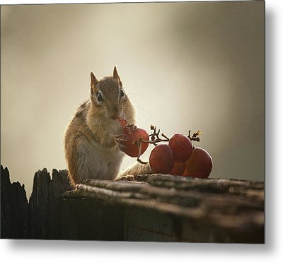 Fruit Of The Vine Metal Print by Susan Capuano