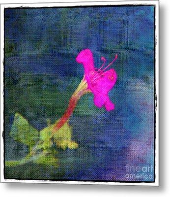 Fuchsia Flower Metal Print by Judi Bagwell