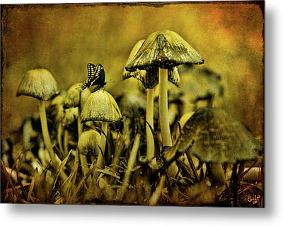 Fungus World Metal Print by Chris Lord