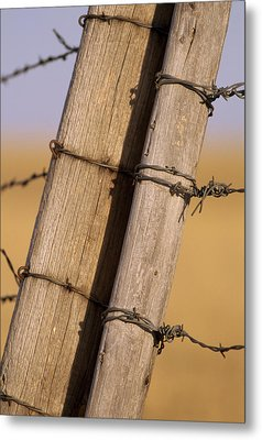 Gate Posts Join A Barbed Wire Fence Metal Print by Gordon Wiltsie
