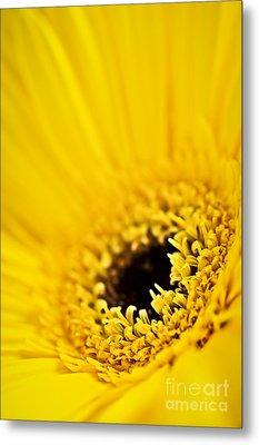 Gerbera Flower Metal Print by Elena Elisseeva
