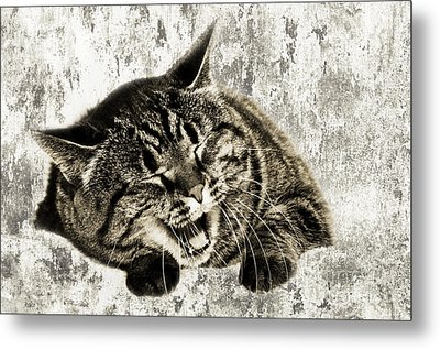 Giggle Kitty  Metal Print by Andee Design