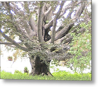 Giving Tree Metal Print by Rachel Snell