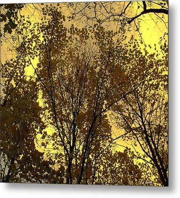 Glisten Metal Print by Ed Smith