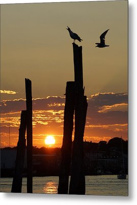 Gloucester Sunset Metal Print by Matthew Green