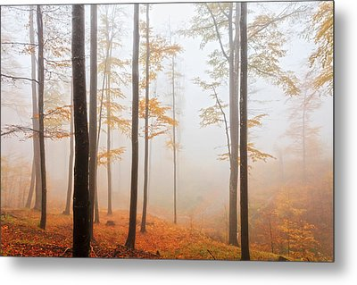 Golden Autumn Forest Metal Print by Evgeni Dinev
