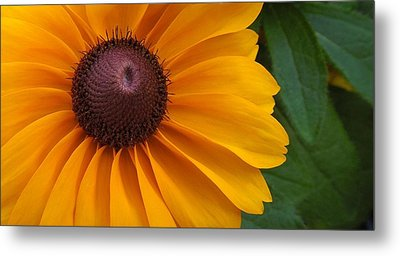 Goldilocks  Flower Metal Print by Chad and Stacey Hall