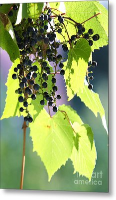 Grapes And Leaves Metal Print by Michal Boubin