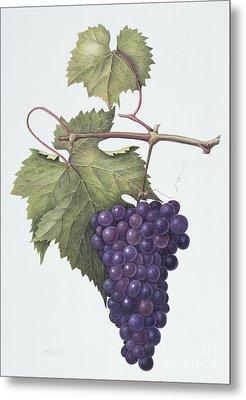 Grapes  Metal Print by Margaret Ann Eden