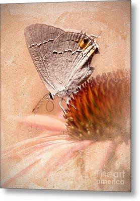 Gray Hairstreak Butterfly Metal Print by Betty LaRue