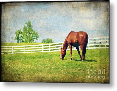 Grazing Metal Print by Darren Fisher