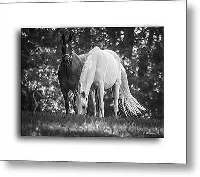 Grazing In Black And White Metal Print by Brian Wallace