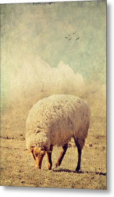 Grazing Sheep Metal Print by Kathy Jennings