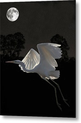 Great Egret In Flight Metal Print by Eric Kempson