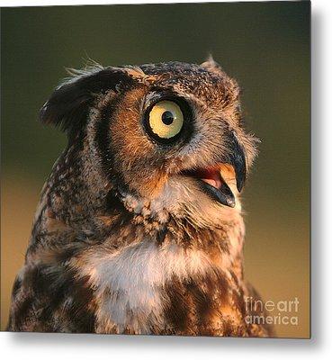 Great Horned Owl Metal Print by Clare VanderVeen
