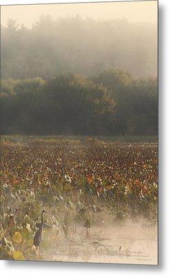 Great Meadows National Wildlife Refuge Blue Heron Fog Metal Print by John Burk