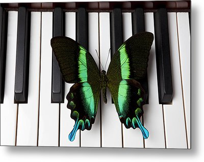 Green And Black Butterfly On Piano Keys Metal Print by Garry Gay