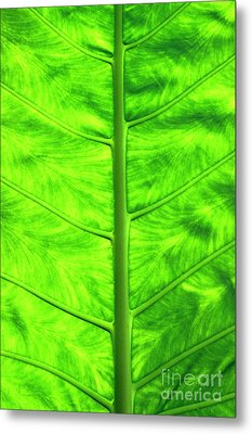 Green Leaf Metal Print by Sami Sarkis