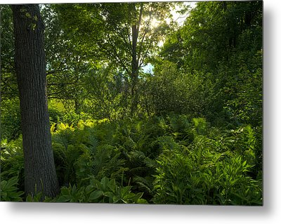 Green Light Metal Print by Steve Gadomski