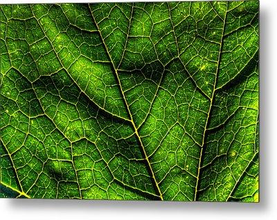 Green Pumpkin Leaf Metal Print by Matt Dobson
