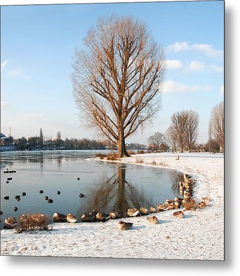 Group Of Geese Huddled Together Metal Print by Richard Fairless