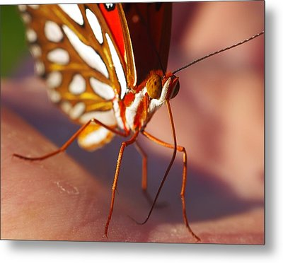 Gulf Fritillary Metal Print by Billy  Griffis Jr