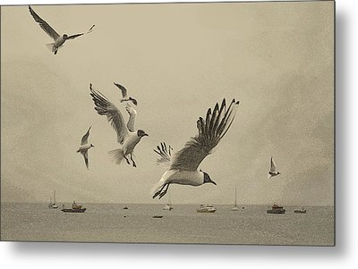 Gulls Metal Print by Linsey Williams