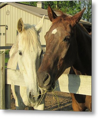 Hanging Out Metal Print by Kristine Bogdanovich
