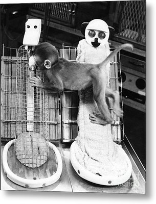 Harlows Monkey Experiment Metal Print by Photo Researchers, Inc.