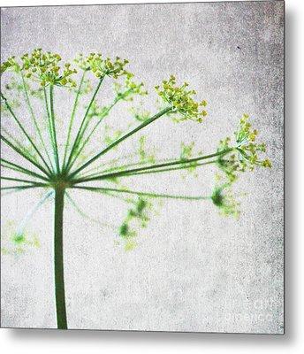 Harvest Starbust 3 Metal Print by Linda Woods
