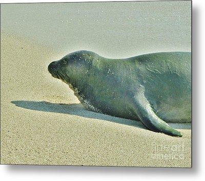 Hawaiian Monk Seal Metal Print by Craig Wood